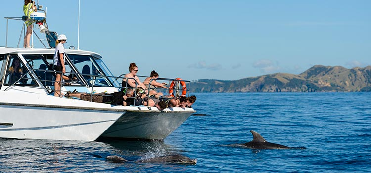Adventure holiday itinerary Bay of Islands