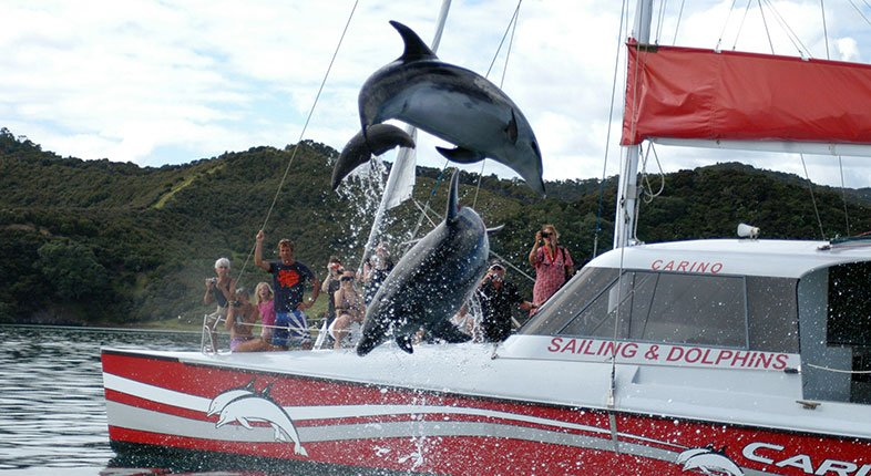Carino Sailing and Dolphin Adventures, Bay Of Islands