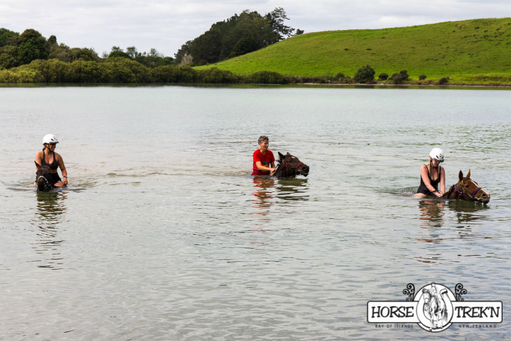 Horse Trekn NZ - horse riding in deep water