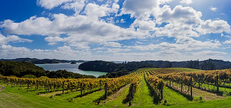 Wineries Bay of Islands