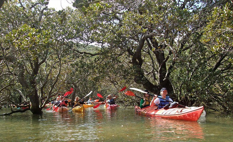 Mangroves kayak tour