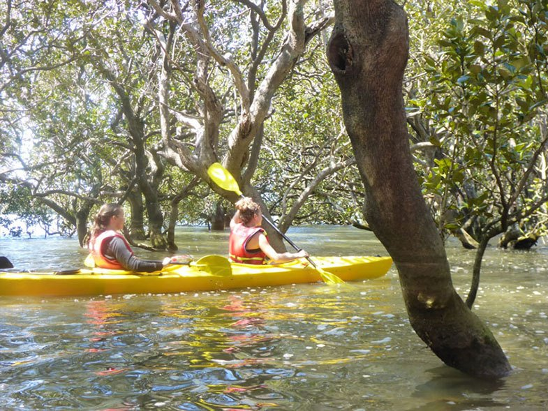 Coastal Kayakers Bay of Islands Mangroves