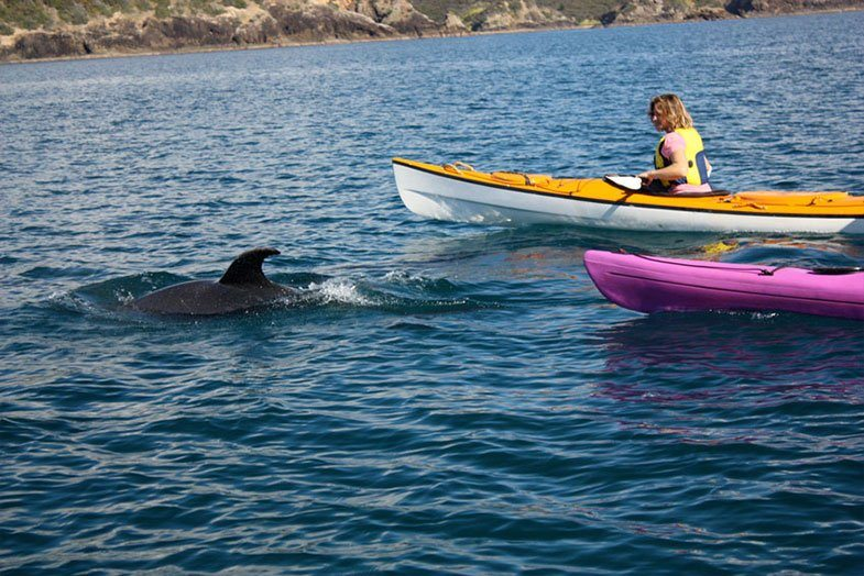 Coastal Kayakers Dolphins