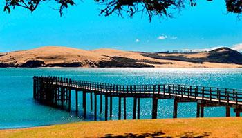 Discover Hokianga