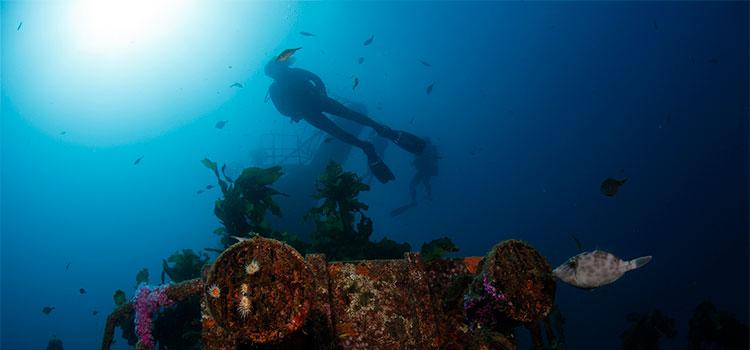 diving-snorkelling Bay of Islands