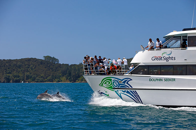 Dolphin Cruise to the hole in the rock