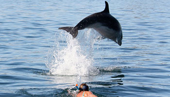 Explore Dolphin Encounter