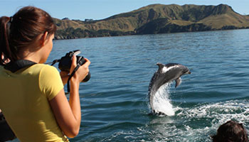 explore group, dolphin viewing, bay of islands