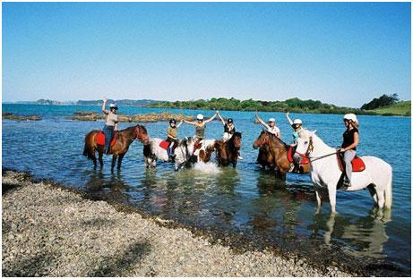 Horse Trekn Group