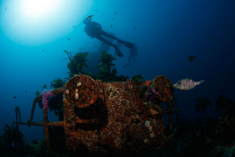 Wreck diving, Bay of Islands