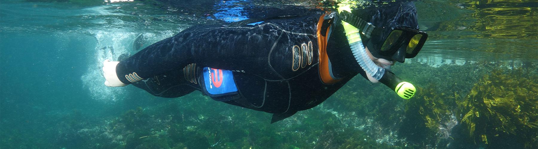 Paihia Dive snorkling