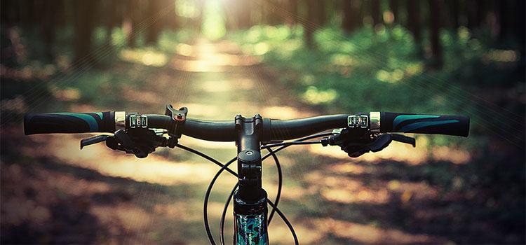 Mountain Biking & Cycling - Land Activities Bay of Islands