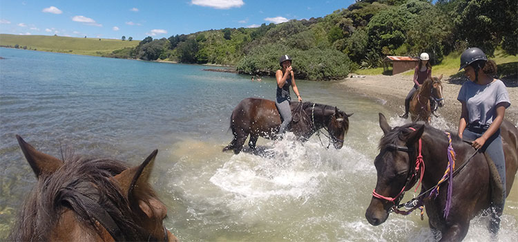 Horse Riding - Land Activities Bay of Islands