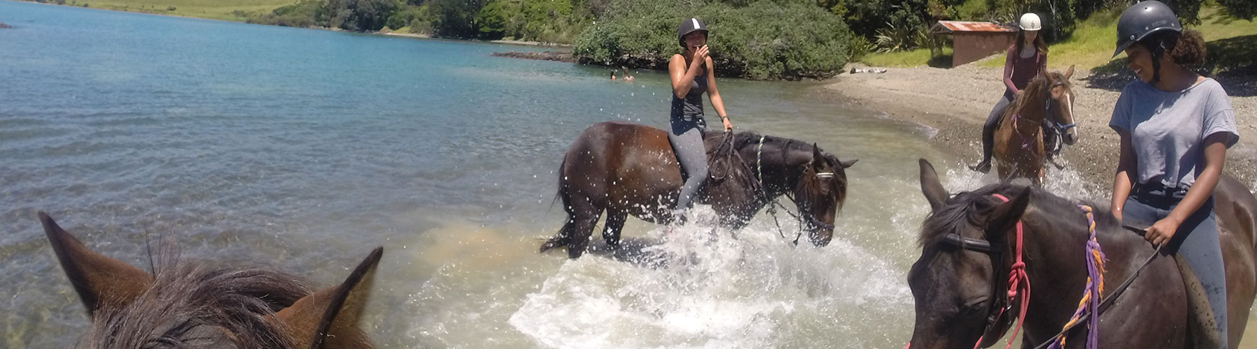 horse-riding Bay of Islands