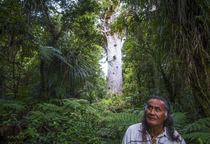 Tour guide at Tane Mahuta