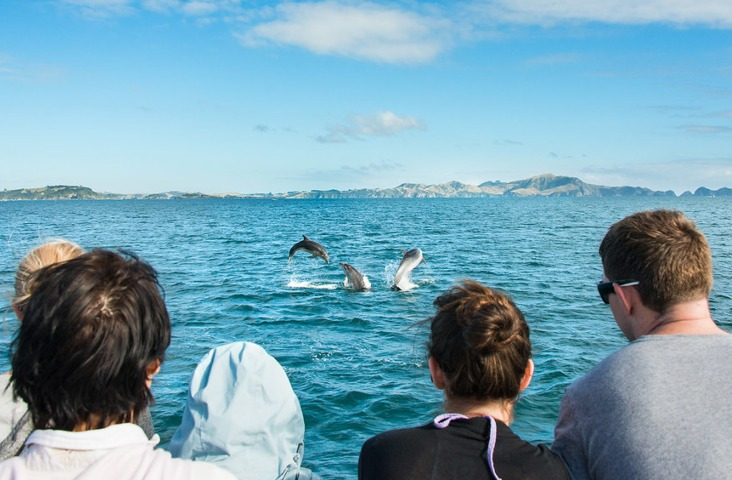 Dolphin Safari - Discover The Bay Cruise - Image 2