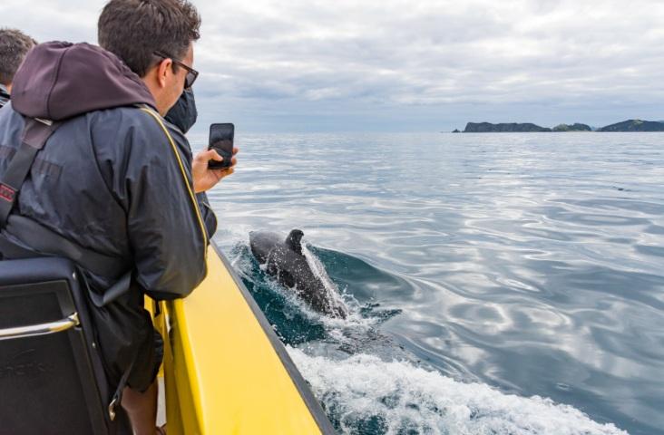 Dolphin Safari - Ocean Adventure Tour - Image 3