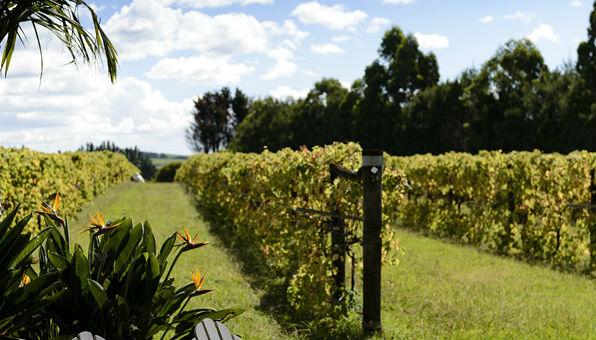 ake ake vineyard, bay of islands