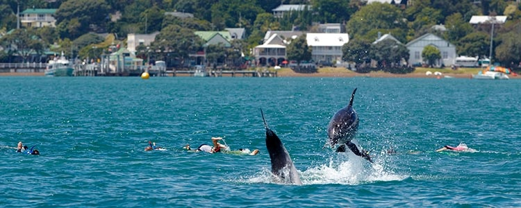 Swimming with Dolphins in the bay