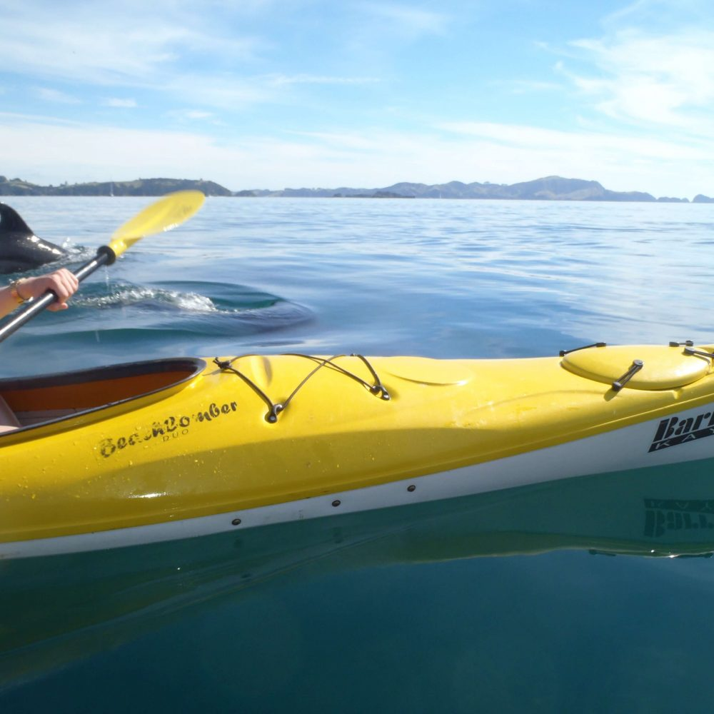 Kayak with dolphin
