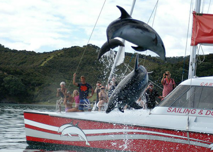 Carino Sailing and Dolphin Adventures
