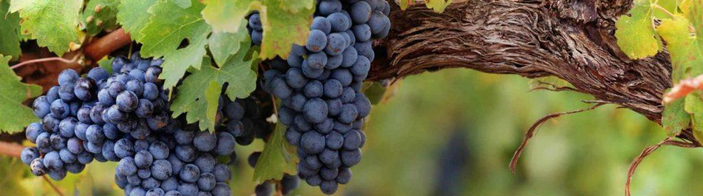 Bay of Islands wineries
