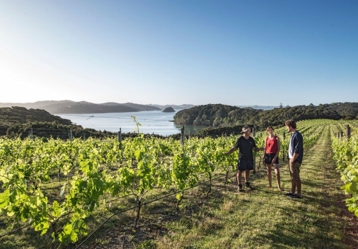 Omata Estate Winery, Bay of Islands