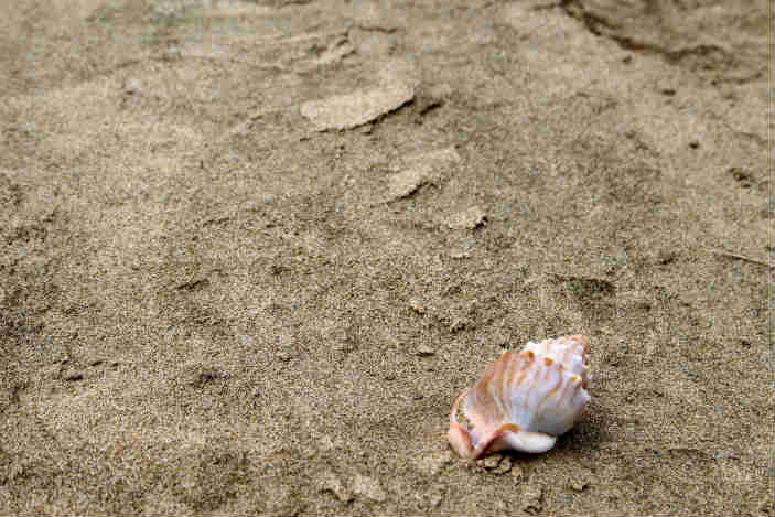 Shell on the beach at Cape Reinga