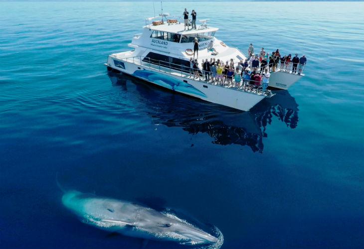A Bryde's Whale - Photo: Auckland Whale and Dolphin Safari