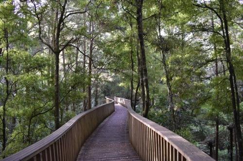Haruru Falls Mangrove Forests (Best Travel Guide NZ)