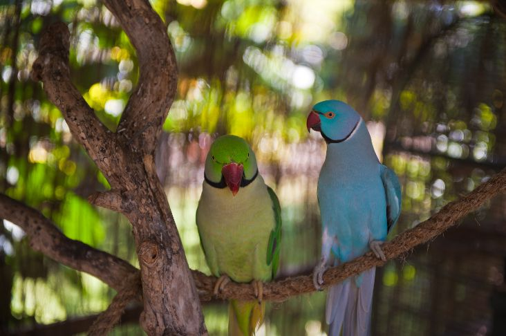 2 Parrots perched together on branch