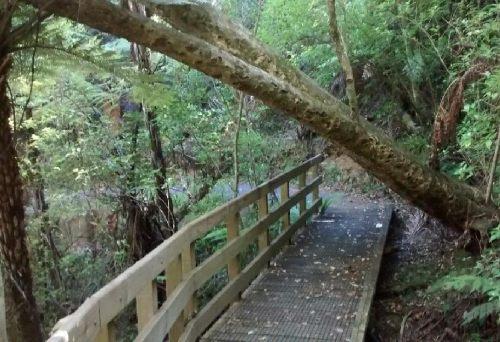 Opua Kauri Walkway