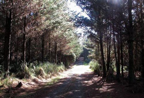 Waitangi Forest