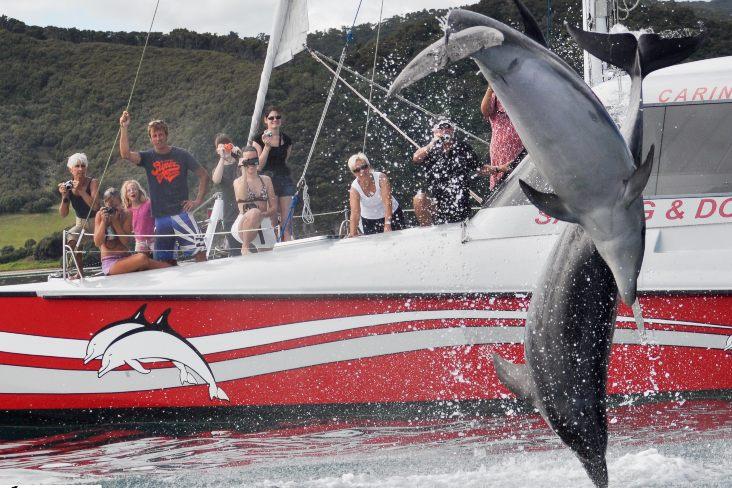 Kat Dolphi jump - Carino Wildlife Cruises